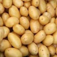 yellow fresh potato