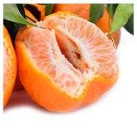 Tangerine(Lu gan)  Manufacturer