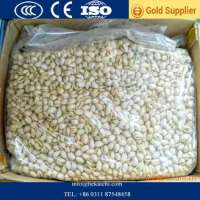 Raw Pistachio nuts  Manufacturer