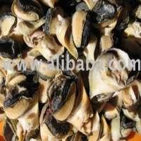 SHELL MEAT Frozen Boiled Topshell Rockshell Meat Manufacturer