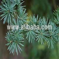 Cedrus Atlantica Essential oil Pure and Natural Manufacturer