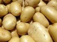 Fresh Farm Potato