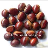 buy chestnut fresh chestnut fresh chinese chestnut for sale
