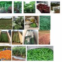 Farm fresh vegetables Manufacturer