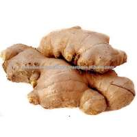 Ginger Oil Pure and Natural