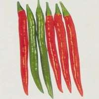 Hybrid Red Pepper Seed Manufacturer