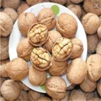 Walnuts in shellwalnuts kernels Manufacturer