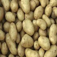 Fresh Irish Potatoes