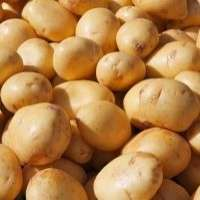 Onions Manufacturer