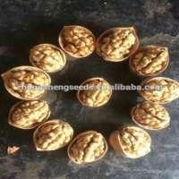 Gold raw walnut in thin shell Xinjiang origin Manufacturer