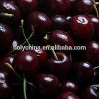 fresh cherry Manufacturer