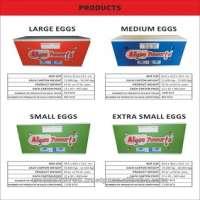 fresh white eggs Manufacturer