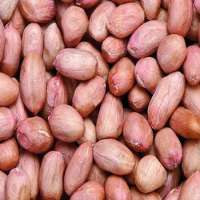 oil extractor peanuts Manufacturer