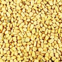 Fenugreek Manufacturer