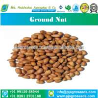 Natural Ground Nut For Oli