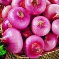 Organic White Onion Manufacturer