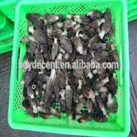 Morel mushroom Manufacturer