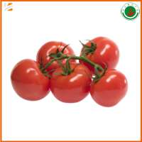 good quality fresh tomatoes  Manufacturer