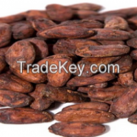 Cocoa Beans Manufacturer