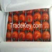 Fresh vegetables uzbekistan Manufacturer