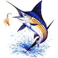 Sport fishing tshirts Manufacturer