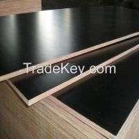 Film faced plywood Manufacturer