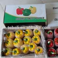 fresh red color capsicum Manufacturer