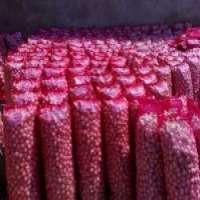 Fresh red onion Manufacturer