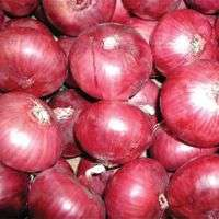 Fresh red and yellow onion Manufacturer