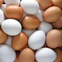Fresh table eggs  Manufacturer