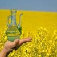 Sunflower oil soyabean oil rapeseed oil cruderefined Manufacturer