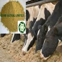Guar gum powder dairy  Manufacturer