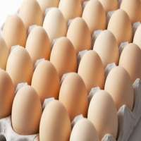Fresh White and brown Table eggs Manufacturer
