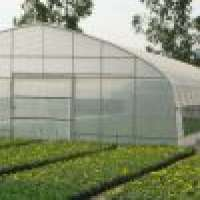 Agricultural Single Span Substantial Tunnel Greenhouse f Manufacturer
