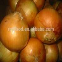 Fresh & colored onion  Manufacturer