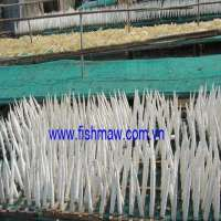 dried fish maw Manufacturer