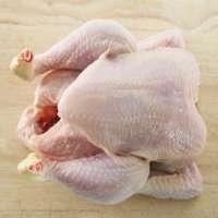 Frozen ChickenChicken FeetWingsLegsBreast Manufacturer