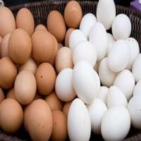 Eggspoultry eggsfarm fresh white eggs