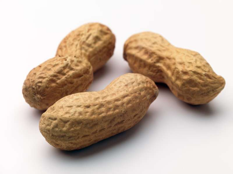 Raw Groundnuts In Shell