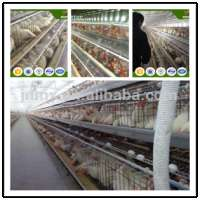 poultry cage system chicken broiler eggs