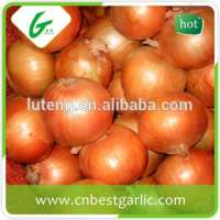 fresh red onion in mesh bag  Manufacturer