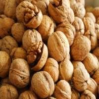 walnut in shell Manufacturer