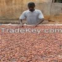 Raw cocoa beans grown fermented and dried  Manufacturer