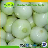 Fresh white onions Manufacturer