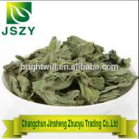 Green Organic Dried Mint Leaves Herbal Tea Manufacturer