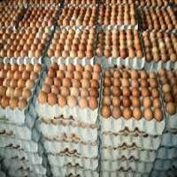 Chicken Table Eggs Brown and White Shell Chicken Egg Manufacturer