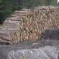 Wood logs timber lumber plank russia Manufacturer