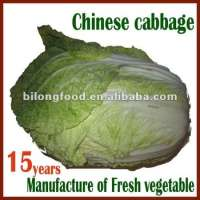 long white cabbage