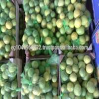 FRESH juicy LIME Manufacturer