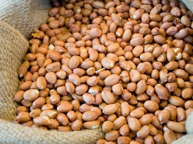 First Quality Ground Nut